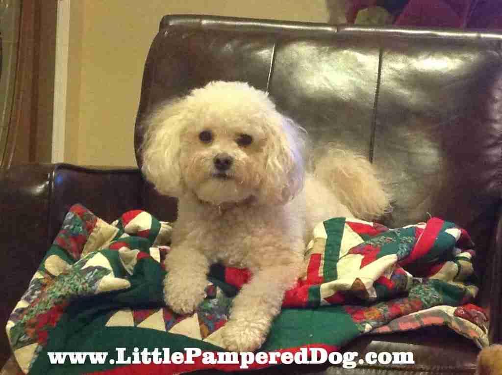 Bella Christmas Quilt