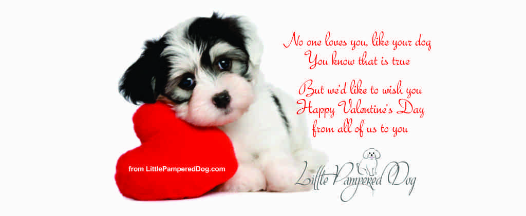 Valentine's Day Wishes from Little Pampered Dog