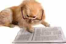 Little Pampered Dog News Highlights - August 21, 2014