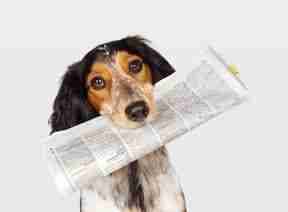 Little Pampered Dog News Highlights August 18, 2014