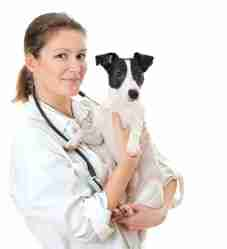 Are you sure your veterinarian is licensed?