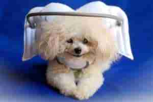 Guardian Angels for Blind Dogs - Muffin's Halo