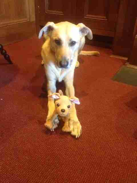 Real Jingles and Stuffed Toy Jingles