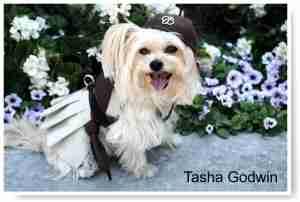 Tasha Godwin - PupScout