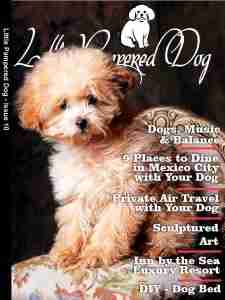 Little Pampered Dog Issue 10