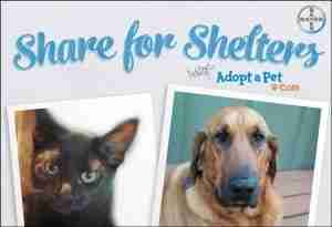 Between now and the end of 2015, for every pet photo uploaded to www.ShareForShelters.com or shared across your social channels using #ShareForShelters, Bayer will provide products valued up to $20,000 to Adopt-a-Pet.com (PRNewsFoto/Bayer HealthCare)