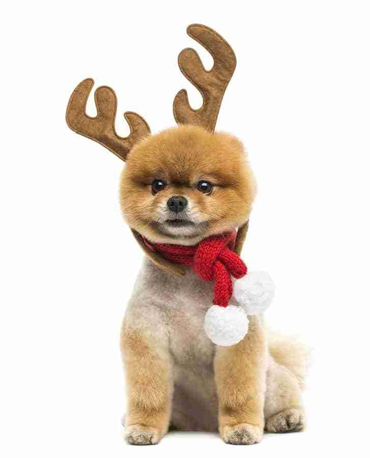 Santa's Reindeer are Deemed Flight-Ready