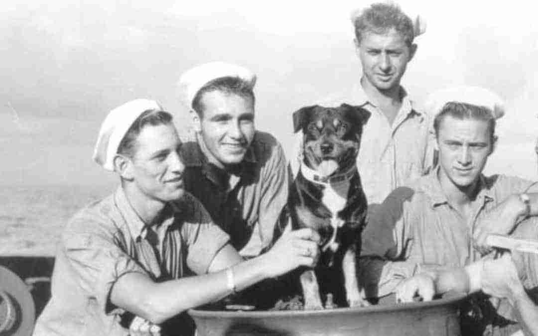 From Mutt to Maritime Hero
